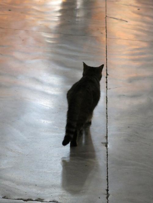 アヤソフィア3<br /><br />モスクといっても今は博物館・美術館となり、一般の人が礼拝に訪れるわけではありません。 (30TL) ちなみにこの猫はフリーパスだそうです。