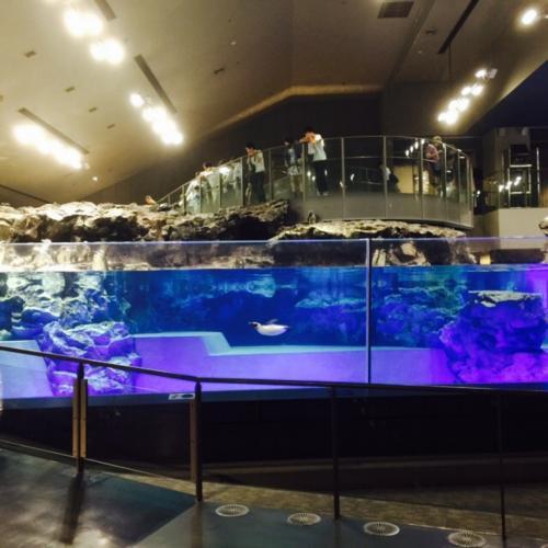 こちらはペンギン水槽<br /><br />ペンギンたちが元気よく泳いでいます<br /><br />この日はペンギン水槽でマッピングのショーがありました