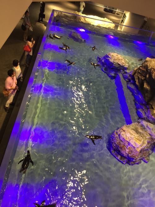 水槽で照明と音楽によるショーです。<br /><br />暗くなるのでせっかくのペンギン水槽ですが、ペンギンはほとんど見えないのがちょっと企画的にザンネンなような、、<br /><br />でも行ってみたかった水族館の1つだったので「行けた」というだけでかなり満足w<br /><br />一番はやっぱチンアナゴくんたちでしょうか^^<br /><br />すみだ水族館<br />http://www.sumida-aquarium.com/