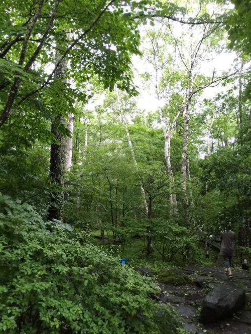 林の小道が作ってあり、森林浴をしながらお散歩