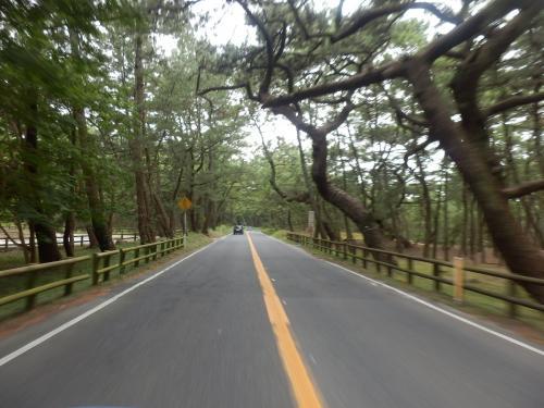 高速を乗り継いで佐賀県に入ると、まずは日本3大松原の一つに数えられる虹ノ松原に入る。延々と続く松原はどこかに迷い込んでしまったような錯覚を覚える。<br />松原を抜けると唐津城が目の前に見えたが、今回はパスだ。