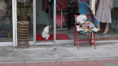 近くのお店の店先にもネコさんが(^ ^)<br />身体はこっち向いてるんだけどな…