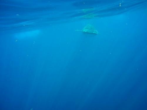 海に入るとジンベイが目の前を通る予定だったのですが・・・