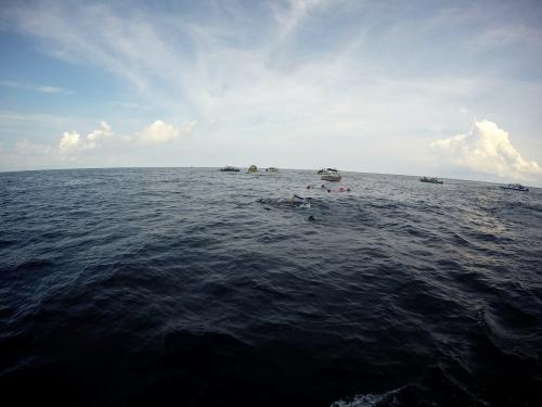 約1時間30分 カリブの海にゆられ、<br />ジンベイザメのいるポイントに到着。