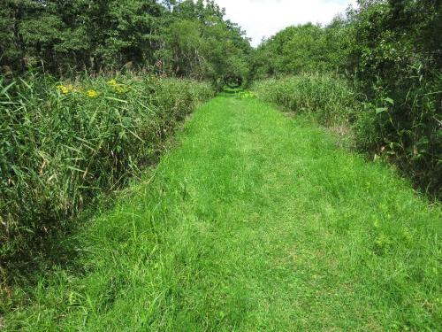 旧鴨居軌道跡探勝道<br /><br />釧路湿原展望台より、湿原探勝歩道を温根内ビジネスセンターまで歩きます。<br />行程約3時間,こちらは湿原の西側にあたります。 よく見れば両側は低層湿原帯。<br />川は蛇行しますが、道は真っすぐな一本道<br />贅沢な緑の絨毯道が続きます。
