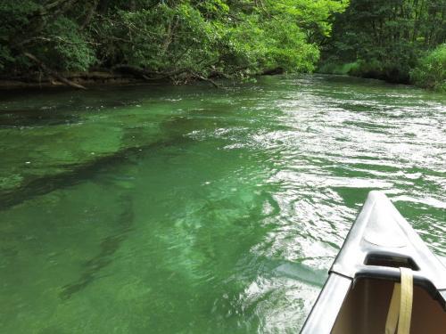 緑がハンパない<br />ウキ浮き、ワク湧く、ドキ時です