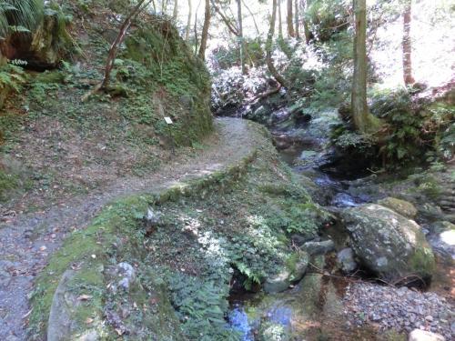 多分この遊歩道は、松尾池まで続いていると思われる。
