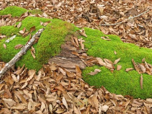 夏ならば苔で覆われた倒木がいっぱいなのだが・・・