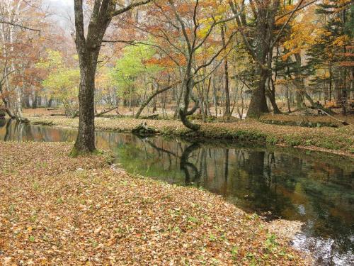 クリンソウの群落する川縁に、今はだれもいない。<br /><br /> ・秋深し静けさだけが舞いて散る