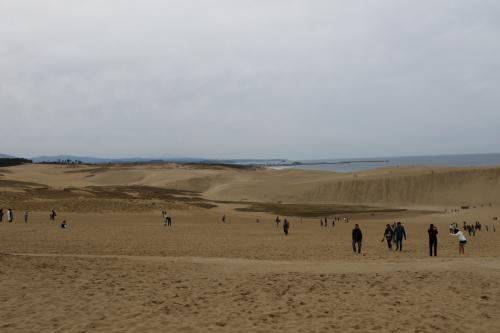 らっきょう畑から鳥取砂丘は直ぐ近くです。<br /><br />駐車場に車を止めて砂丘へ向かいます。<br /><br />うぉーココが鳥取砂丘かぁ<br />でっかい砂場だ。<br /><br />ココにきたら馬の背まで行かないとダメですね