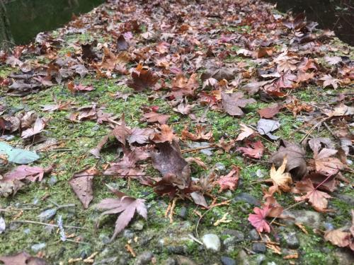 そう広くない園内を散策していて。。<br /><br />もみじがすでに枯れているwww<br /><br />落ちている葉っぱだけじゃなく、木もすでに枯れ葉状態><。<br /><br />