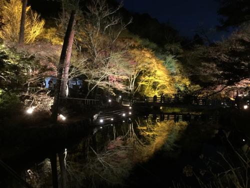 日が暮れてきて、ライトアップ効果がでてきました。<br /><br />ここは川に写る逆さもみじが有名な場所です。<br /><br />地元にいながら、全然知りませんでしたが、遠く関東から来ていらっしゃる方もみえました。