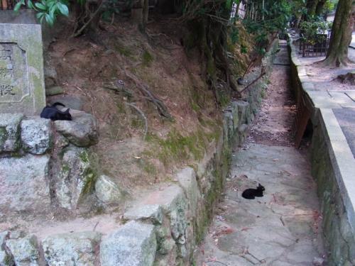黒猫が落ちてる…いや寝ている。