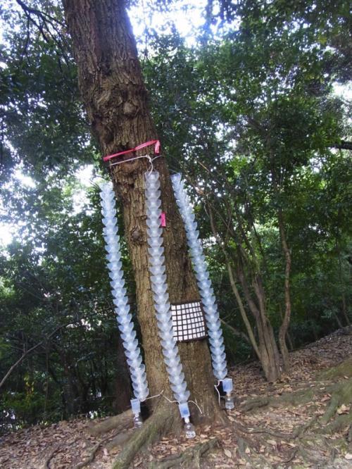 船岡山を上までは登らず、つっきって行きます。木々に虫取り?みたいなものがいっぱいつけられていて、なんだこりゃ?とそればっか見て歩いてたような^^;