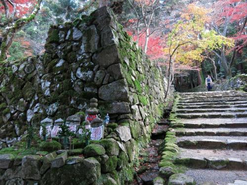 西明寺3<br /><br /> 苔のたいへん美しいお寺でありました。<br />三重の塔もあります。