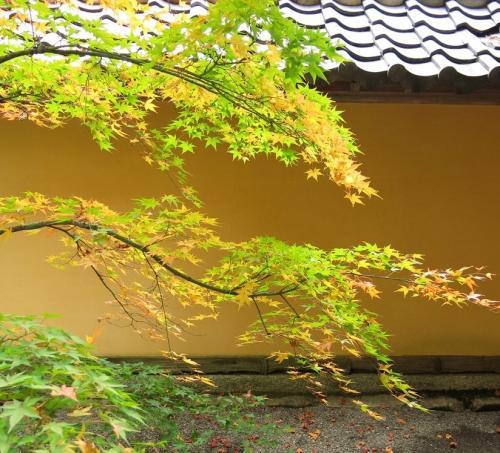 西明寺4<br /><br />紅葉は早いんだか、遅いんだか??<br />天気が安定しないので、枯れてしまっていたり、まだ青かったり<br /><br /> ・薄紅葉そっと眺めて西明寺
