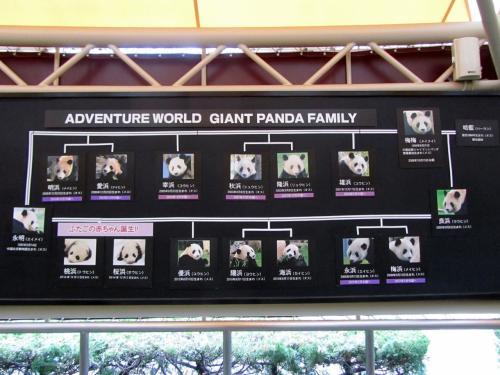 アドベンチャーワールドのジャイアントパンダの永明パパと梅梅・良浜ママの一族の系譜<br /><br />永明パパは、梅梅母子をお嫁さんにしたわけです。<br />良浜ちゃんは、梅梅ちゃんが中国で身ごもり、アドベンチャーワールドで出産した娘です。<br />永明ちゃんと良浜ちゃんの子供たちにみんな「浜」がつくのは、梅梅ちゃん哀悼の意を込め、梅梅ちゃんの系譜という意味合いもあるようです。<br />