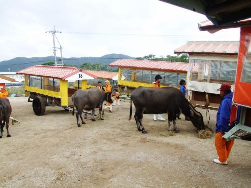水牛車に乗り込みます。