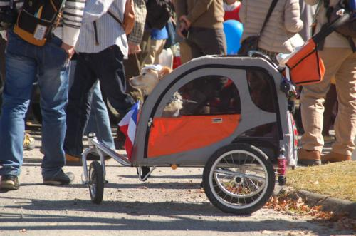カングーの形をした乗り物に犬が乗っている。