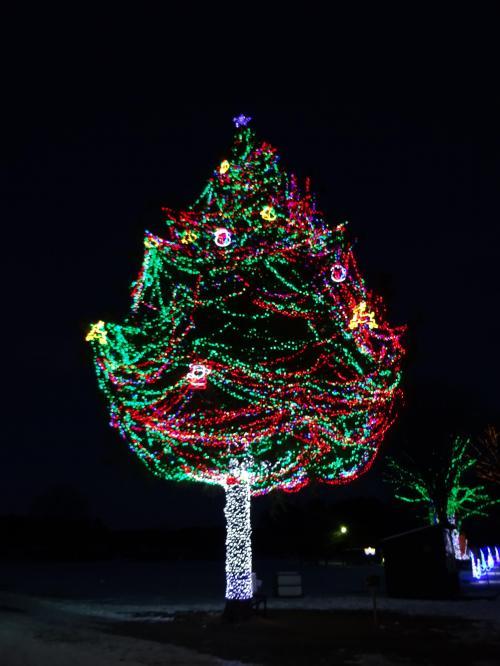 巨大クリスマスツリー☆
