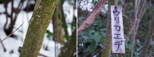 途中で見かけた木札。<br />ウリカエデと描いて有ります。<br />幹の表皮が瓜の柄のようなので、ウリカエデと呼ばれるのだそうです。ウリカエデの由来に付いては、H先生から以前に聞きました。<br /><br /><br />