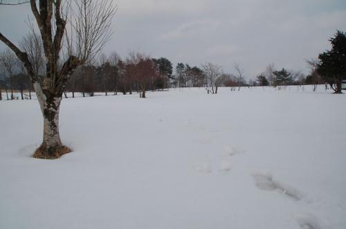 オートキャンプ場は、一面雪で覆われていた。