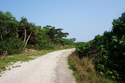 集落を外れて歩いてみました<br /><br />聴こえるのは、鳥の声と波の音だけ