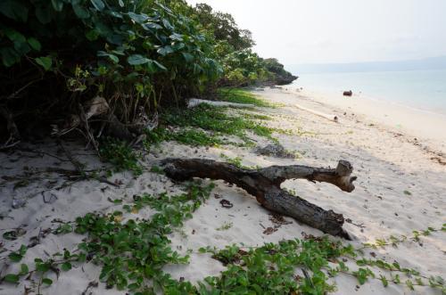 瑠璃が川島さん(竹野内豊)にヘアーカットしてもらっていた砂浜