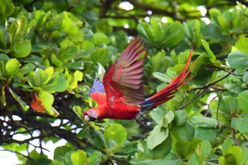 木から木へ飛び移る。