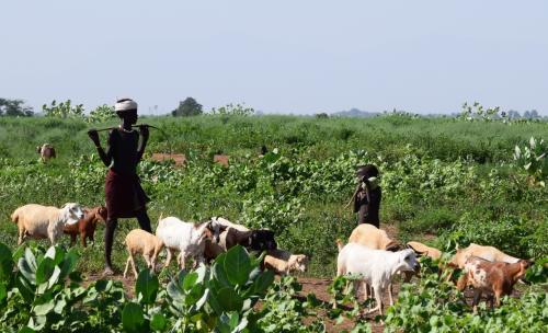 男共は家畜の世話とさっきの船頭の仕事。<br />観光客向けの写真は女性がメイン。