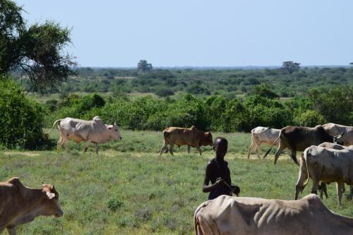 金も大事だけど牛も大事。<br />牛何頭と何かと交換もある。<br />金持ち=牛持ち。