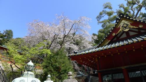 桜が咲いてました。満開ではないけど