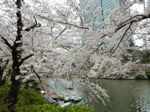 堀とボートと満開の桜のコラボ。