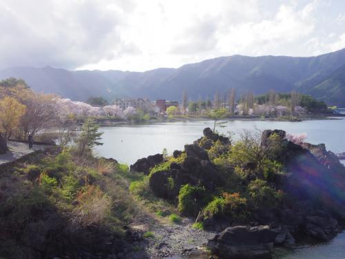 湖畔は桜がきれい。