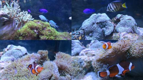 海中で見るはずだったお魚たちを激写!?
