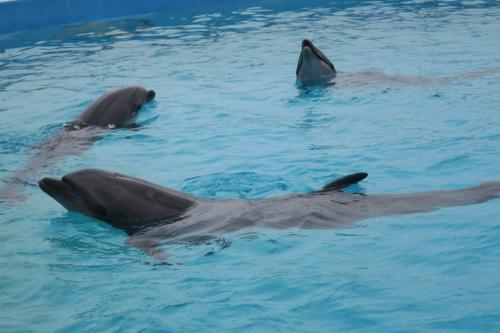 イルカのラグーン