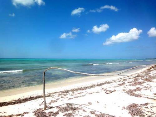 途中の美しいビーチで一枚。なんというか、まるっきり手付かずの美しいい視線に出会うと心が落ち着きます。<br /><br />カンクンのビーチもきれいですが、毎日掃除された作られ整備されたものとはやはりまったく違います。