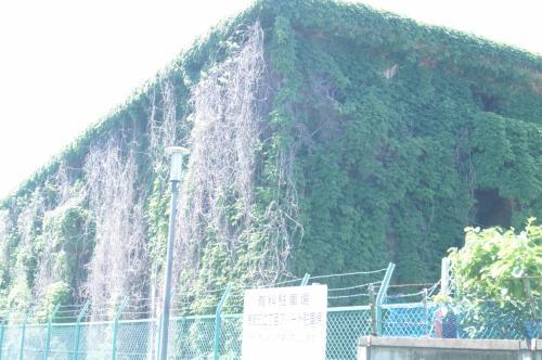 これもまた住居跡だろうか。<br /><br />つる草がからまり、すごいことになっている。