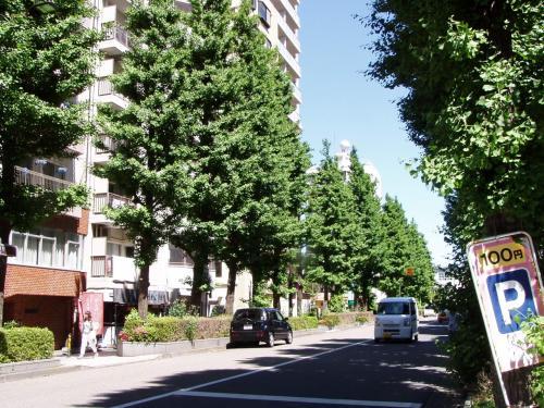 府中市はこのようにけやき並木があちこ<br />ちにあるきれいな街である。<br /><br />お上品なマダムがいっぱいいそうだ。<br /><br />ナンパしたらついて来るだろうか。