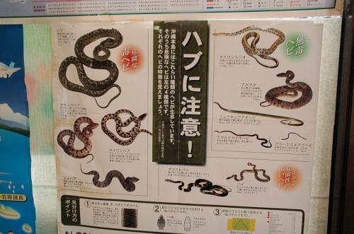 とあるホテルで食事をしたところ、ホテルのロビーにこのような張り紙があった。沖縄には十一種類の蛇がいるが、その中でも危険な蛇は左側に掲載されている四種類の蛇だそうだ。