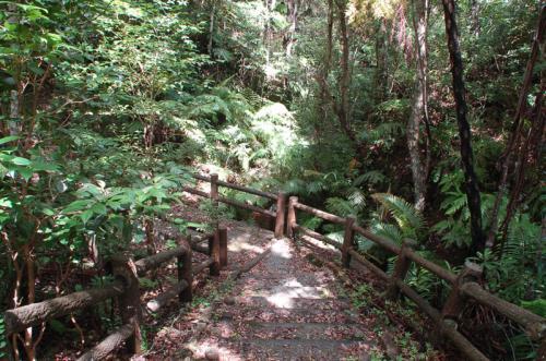 とは言え、ヤンバルクイナの生息地でもあるこの場所は、どうしても散策したくなる場所でもある。そこで、勇気を振り絞って、早朝に森の中を歩いてみた。
