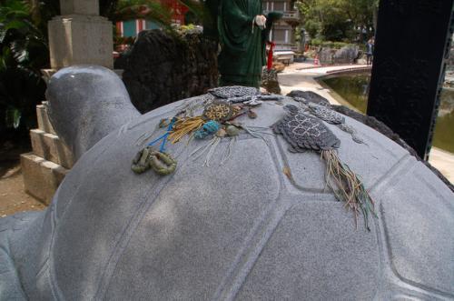 大師亀の背中には、亀の仲間たちが載っていた。