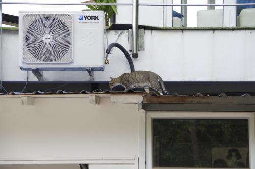 おっと、またまたノラ猫発見。<br /><br />ランカウイでは結構ノラ猫を見かけました。<br />逆にノラ犬は一回も見かけず・・・<br />マレーシアはイスラム教の人が多いからかな。<br />