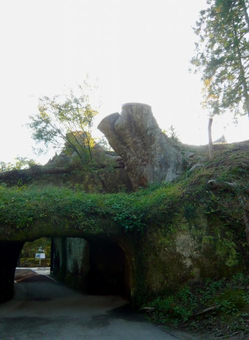 夫婦欅…の跡。樹齢800年の欅は老朽化のためやむなく切られたあとでした。