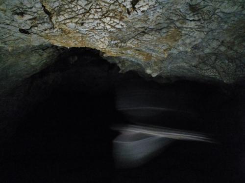 バーミキュレーションの天井下を飛んだコウモリだったか
