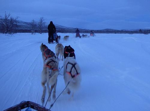 キルナ郊外の Sleddog Trips(犬ぞりツアー)<br />犬ぞり専門の業者が 2〜3時間のコースから 1週間のツアーを準備している。橇(そり)は 3〜4匹から 5〜6匹の犬で引かれる。<br />