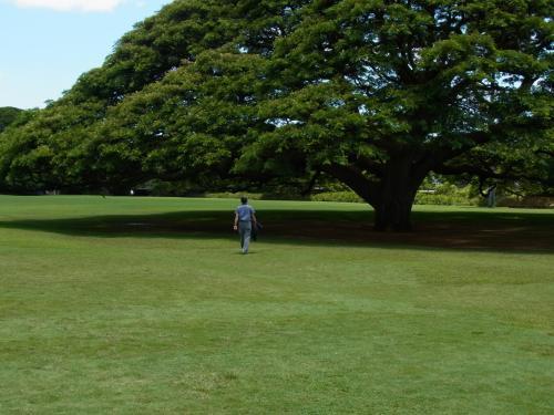 モアナルア・ガーデンズ・パーク。<br /><br />ご存じ、♪この木なんの木♪
