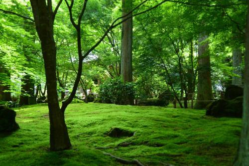 <遠州の庭>