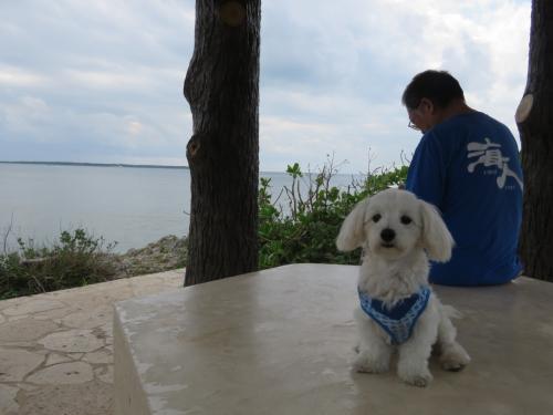 観音崎灯台・展望所では、ワンちゃんが~☆・・<br />「可愛い!」という言葉がわかっているようで、ちゃんとポーズを決めてくれました!<br />写真OKして下さった優しい飼い主さんと、美しい海を眺める日々~幸せな小犬ちゃんです。