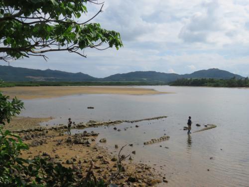 干潟およびマングローブ林を含む地域を、アンパルと呼んでいるそうです。